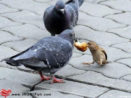 http://ironifun.persiangig.com/images/Khandedar/2/Khandedar_08.jpg